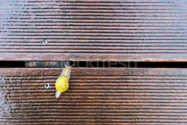 Slak nat terras ondiep veld exemplaar ruimte Stockfoto © bubutu
