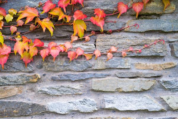 古い 石の壁 ツタ テクスチャ 秋 工場 ストックフォト © bubutu