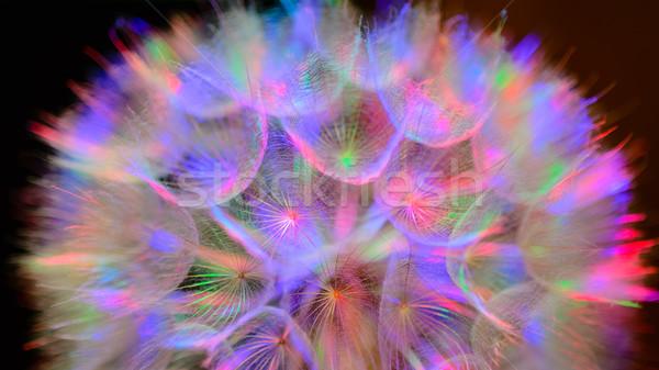 Сток-фото: красочный · пастельный · яркий · аннотация · одуванчик · цветок