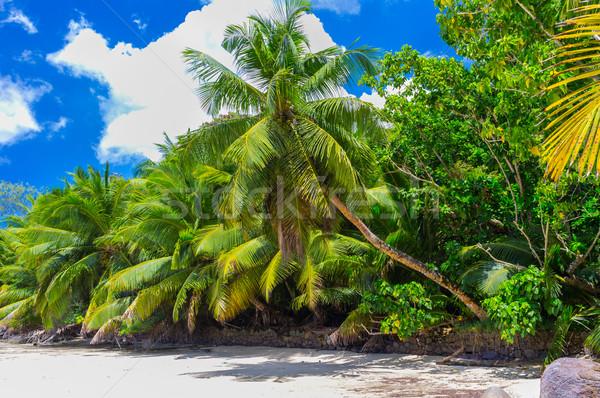 нетронутый тропический пляж Сейшельские острова небе воды дерево Сток-фото © bubutu