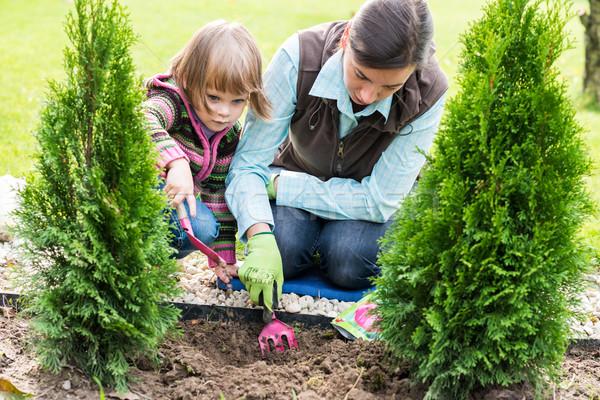 Mother and daughter planting tulip bulbs  Stock photo © bubutu