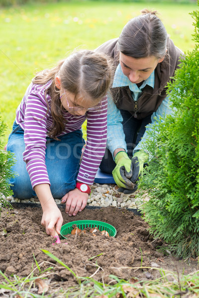Mother and daughter planting tulip bulbs  Stock photo © bubutu