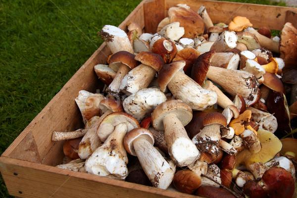 Boletus fresche commestibile alimentare natura Foto d'archivio © Bumerizz