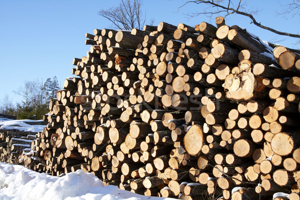 Piles of wood in forest Stock photo © Bumerizz