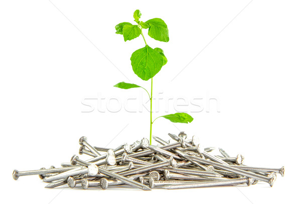 tree growing on nail,Natuer and construction concept  Stock photo © Bunwit