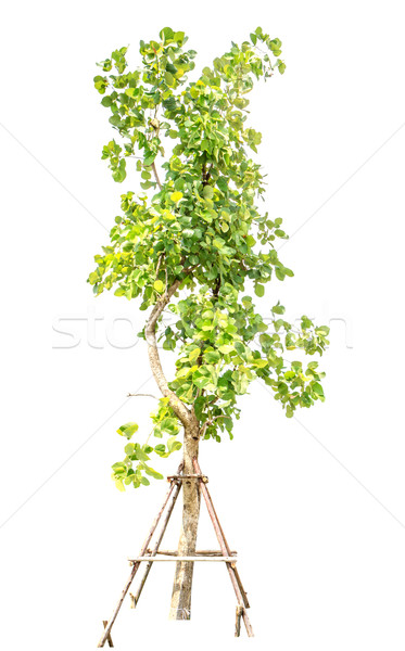 tree decoration isolate Stock photo © Bunwit
