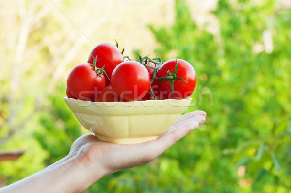 çiftçi organik domates sağlıklı gıda bahar Stok fotoğraf © burtsevserge