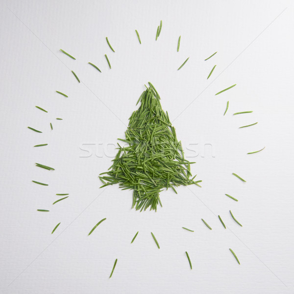 Green tree of the needles Stock photo © butenkow