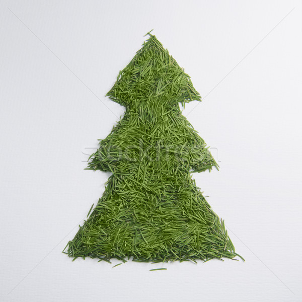 Groene boom naalden witte hout bos kunst Stockfoto © butenkow