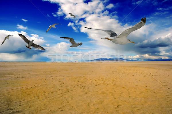 Aves arena de la playa cielo nubes primavera mar Foto stock © BVDC