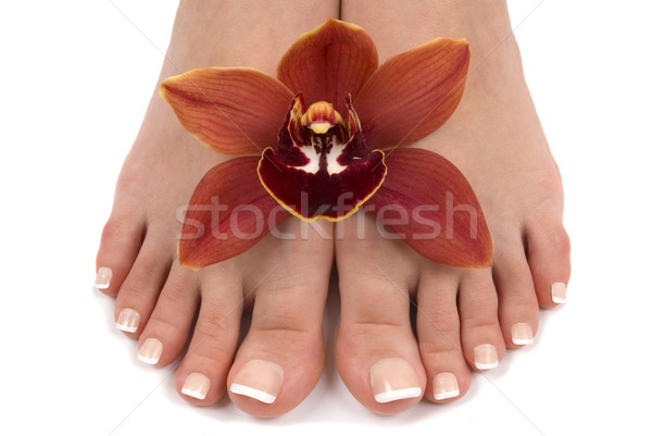 Feet and Orchid Stock photo © BVDC