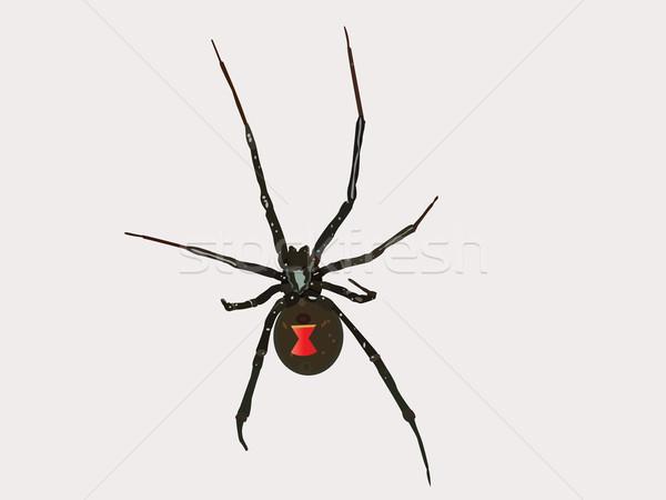 Vector Black Widow Spider Stock photo © BVDC