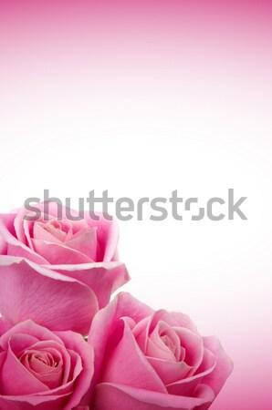 Romantik güller güzel pembe düğün gül Stok fotoğraf © BVDC