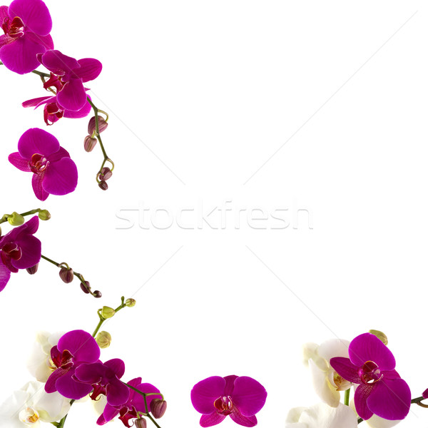 Orchid Border Stock photo © BVDC