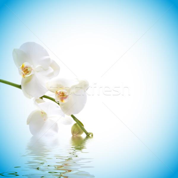 Orquídea belo água reflexão flor flor Foto stock © BVDC