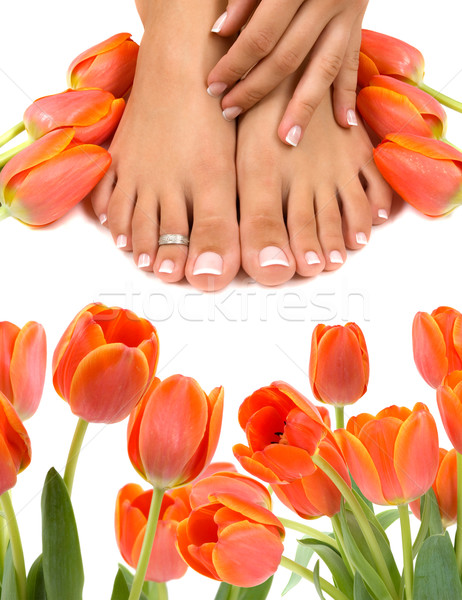 Pieds tulipes mains belle femme main Photo stock © BVDC