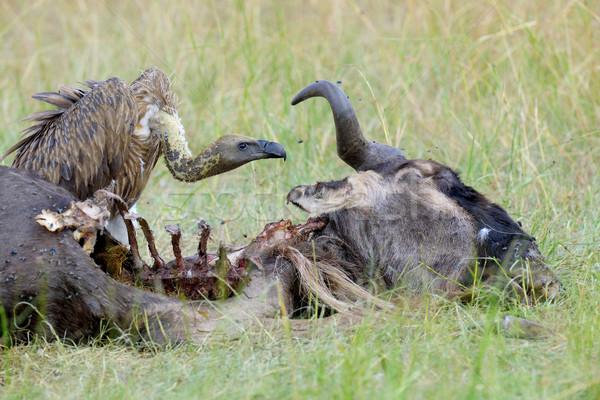 Matar parque Quênia árvore Foto stock © byrdyak