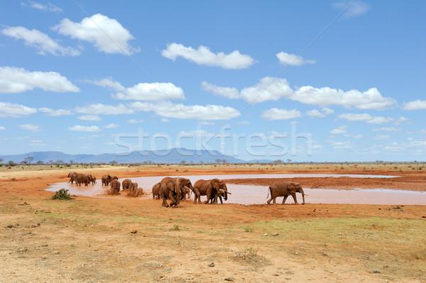 Stock fotó: Elefánt · tó · park · Kenya · Afrika · baba