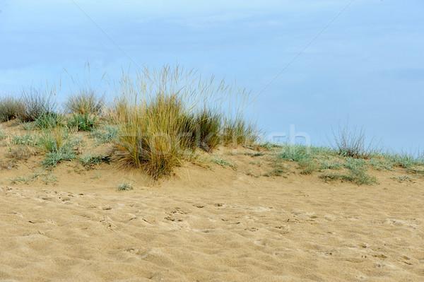 Sand dunes near the beach Stock photo © byrdyak