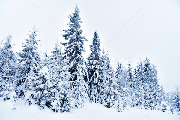 Kış manzara kar kapalı ağaçlar güneş Stok fotoğraf © byrdyak