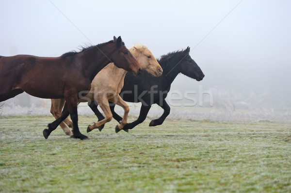 Horse Stock photo © byrdyak