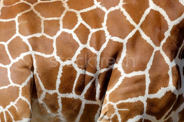 Zsiráf bőr textúra eredeti bőr fény Stock fotó © byrdyak