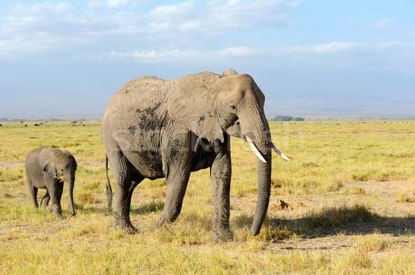 Сток-фото: слон · парка · Кения · Африка · ребенка · трава
