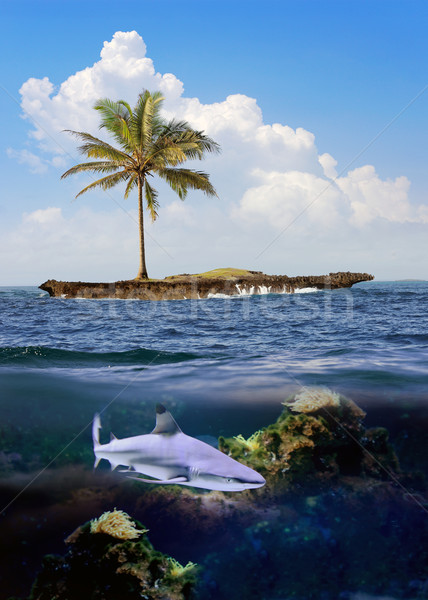 Beautiful island with palm trees and blue sky. Shark underwater Stock photo © byrdyak