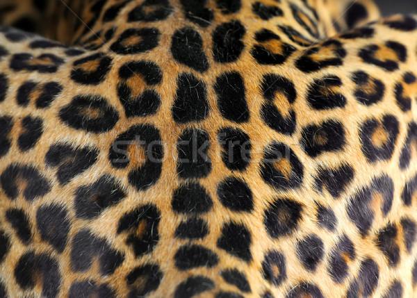 Leopard skin texture  Stock photo © byrdyak