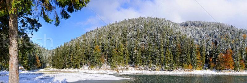 горные лес первый зима снега дерево Сток-фото © byrdyak