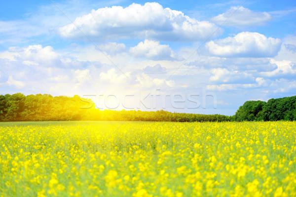 Zomer grasveld zonlicht blauwe hemel hemel zonsondergang Stockfoto © byrdyak