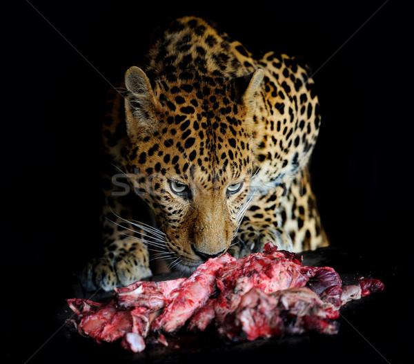 Leopar öfkeli siyah portre et Stok fotoğraf © byrdyak