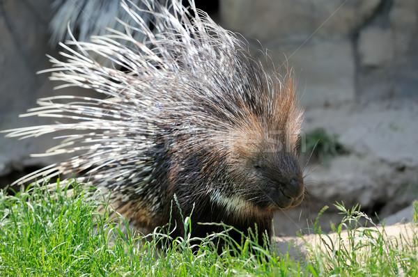 ストックフォト: 草 · クローズアップ · ビッグ · 小さな · 自然 · 公園