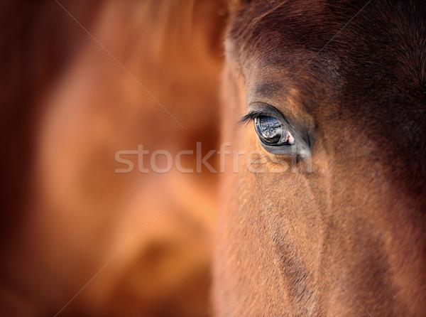 Horse eye Stock photo © byrdyak
