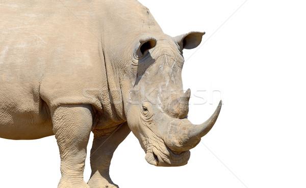 Rinoceronte isolado branco natureza fundo África Foto stock © byrdyak