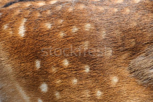Texture deer fur Stock photo © byrdyak