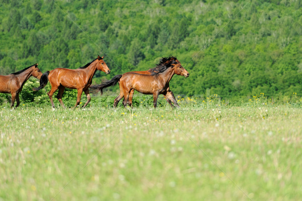 лошади работает области лет день природы Сток-фото © byrdyak