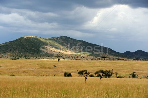 Sabana paisaje parque Kenia África cielo Foto stock © byrdyak