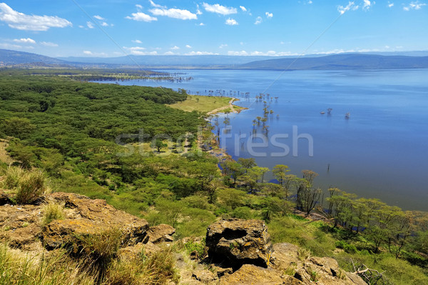 African landscape, bird's-eye view on lake Nakuru Stock photo © byrdyak