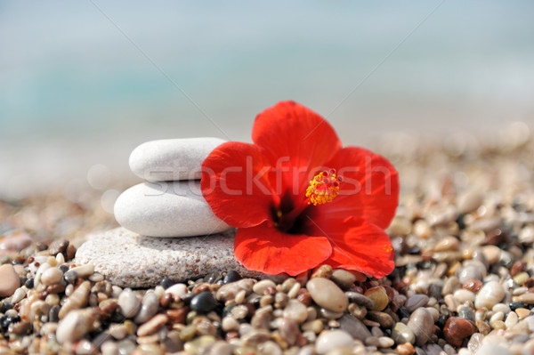 Stack of pebbles and flower Stock photo © byrdyak