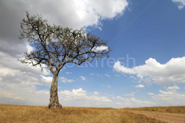 пейзаж дерево Африка красивой никто солнце Сток-фото © byrdyak