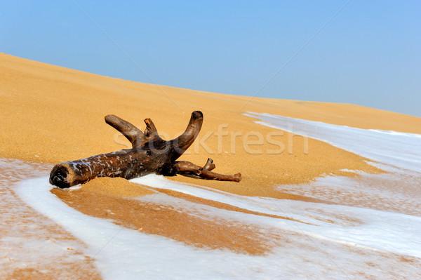 Ramo ondas praia tropical grande céu árvore Foto stock © byrdyak