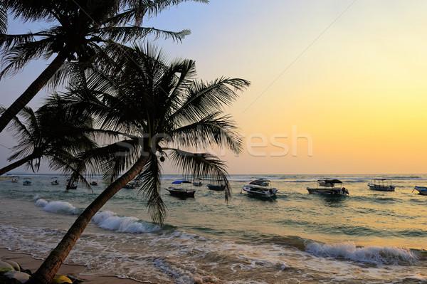 熱帯ビーチ 手のひら スリ·ランカ ビーチ 空 水 ストックフォト © byrdyak