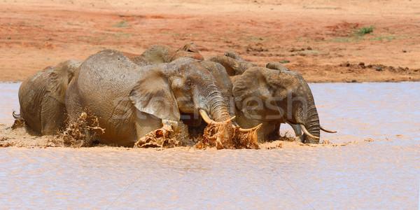 Elephant in lake. National park of Kenya Stock photo © byrdyak