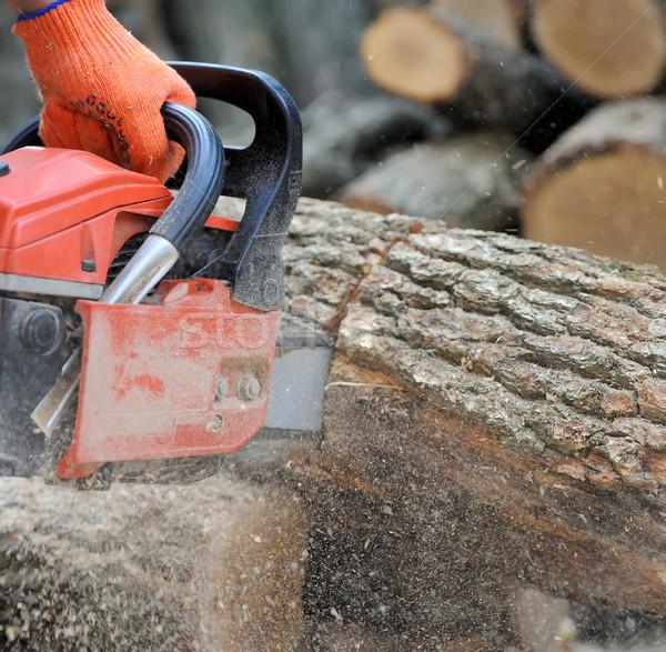 бензопила дерево профессиональных лезвия Сток-фото © byrdyak