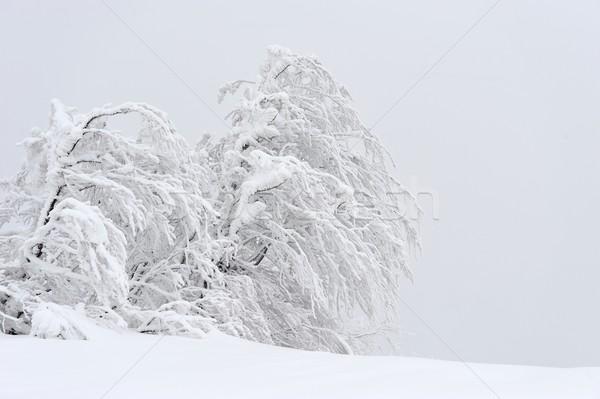 Inverno paisagem neve coberto árvores sol Foto stock © byrdyak