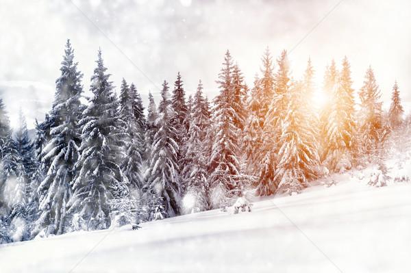 Inverno paisagem belo neve coberto árvores Foto stock © byrdyak