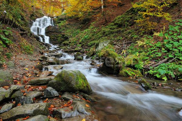 Сток-фото: осень · лес · водопада · пород · желтый · листьев