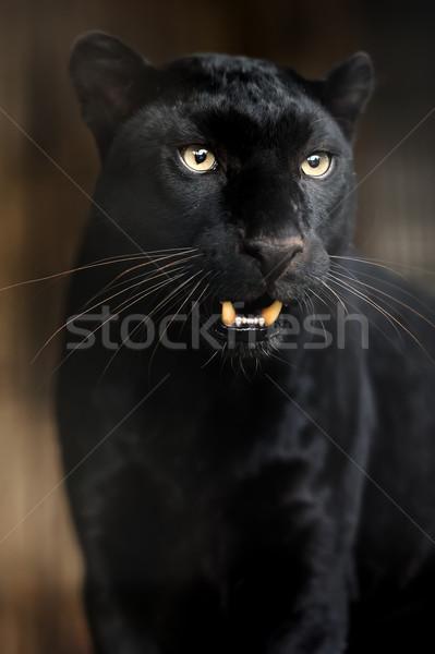 Portrait of Leopard Stock photo © byrdyak
