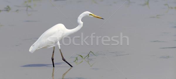 Branco animais selvagens lagoa água mar Foto stock © byrdyak